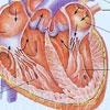 心、心胞的病理变化与梦境(下)