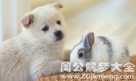 梦见兔子被狗咬.png