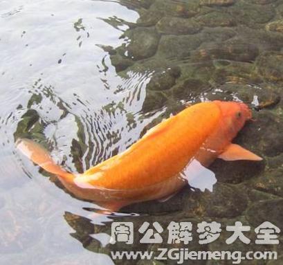 梦见鱼在浅水中挣扎.png