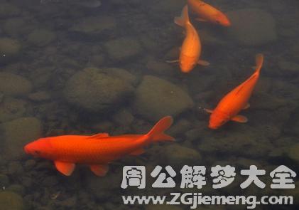 梦见鲤鱼在水里游.png