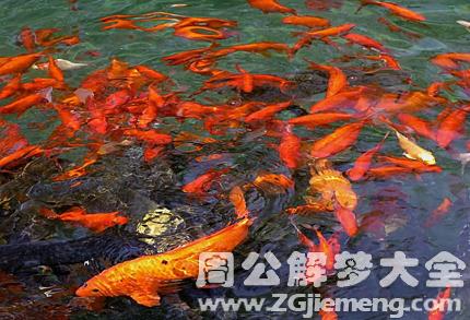 梦见很多鱼在水里游.png