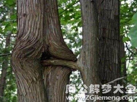 性梦之性象征--水果植物