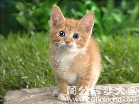 梦见猫.jpg