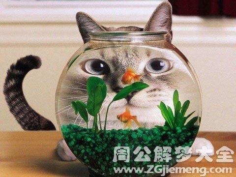 孕妇梦见猫吃鱼.jpg