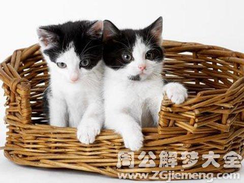 梦见猫怀孕.jpg
