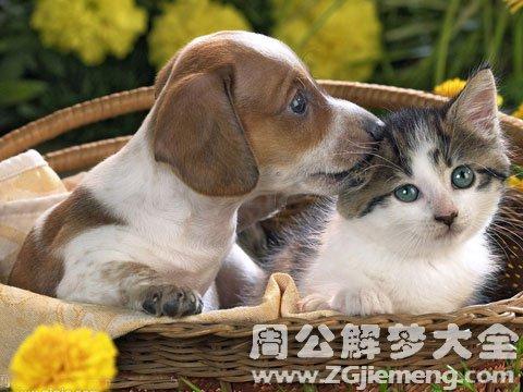 女人梦见猫和狗.jpg