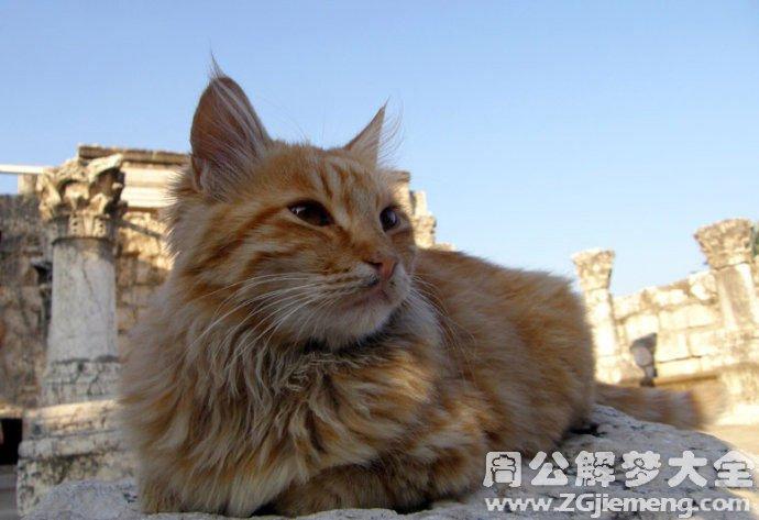 梦见猫死而复活.jpg