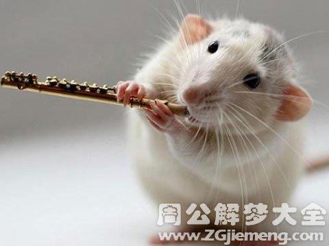 梦见鼠.jpg