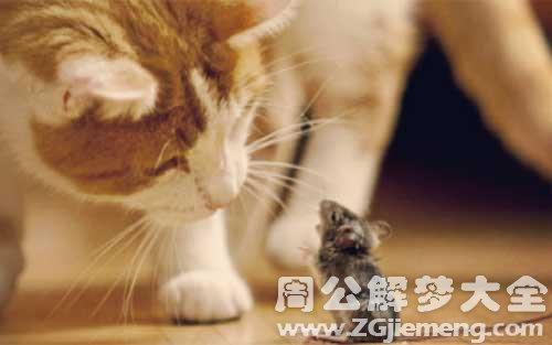 怀孕梦见老鼠和猫.jpg