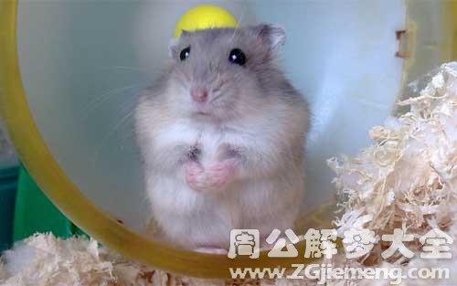 梦见老鼠.jpg