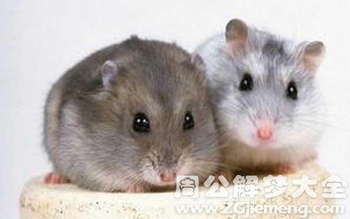 梦见老鼠是什么意思.jpg