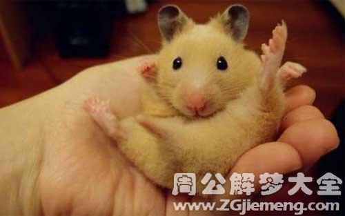 梦见老鼠上身.jpg