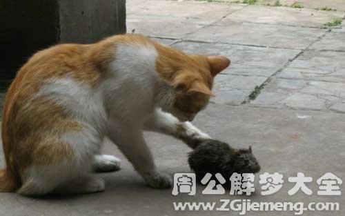 梦见老鼠和猫.jpg