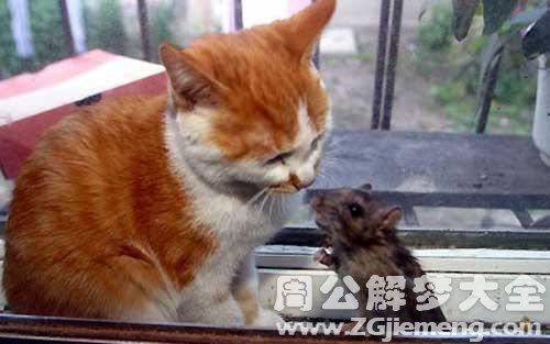 梦见老鼠和猫打架.jpg