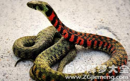 梦见怀孕的蛇.jpg