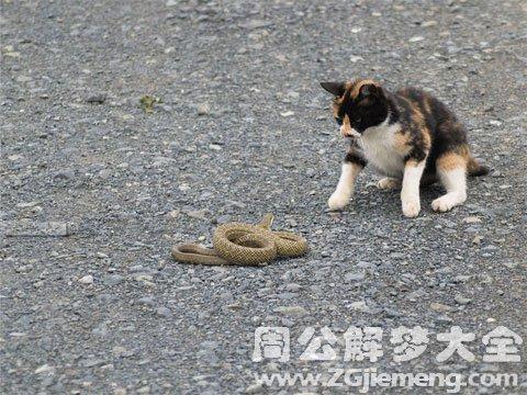 梦见猫和蛇打架.jpg