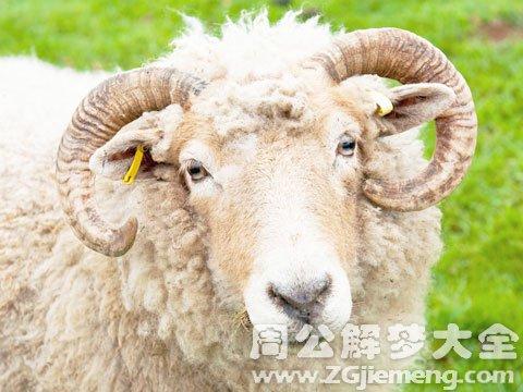 梦见杀羊.jpg