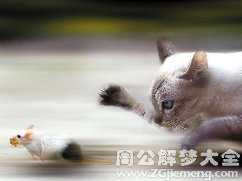 梦见杀老鼠.jpg