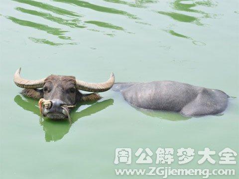 牛被水冲走.jpg