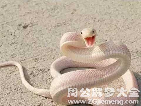 梦见白蛇.jpg