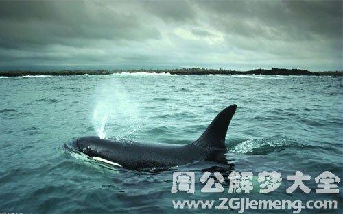 梦见鲸鱼喷水.jpg