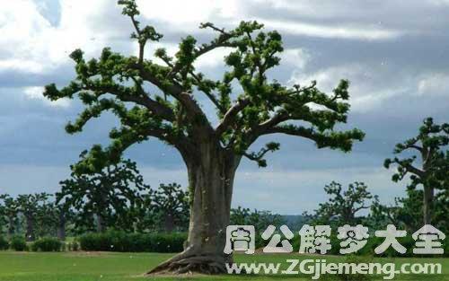 梦见大树.jpg