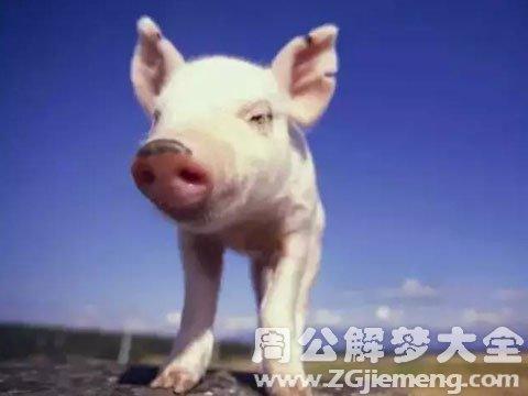 梦见一只猪.jpg