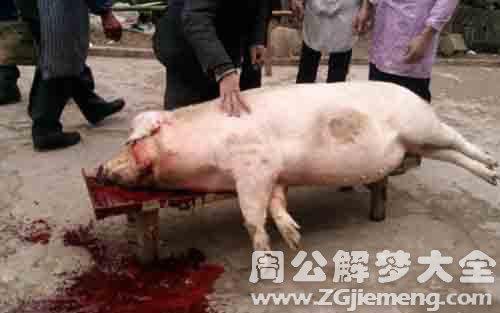 梦见宰猪.jpg