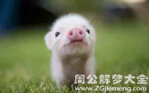 梦见猪圈.jpg