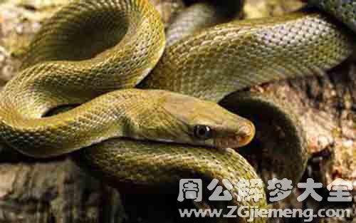 梦见蛇.jpg