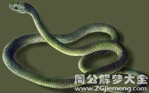 晚上做梦梦见蛇.jpg