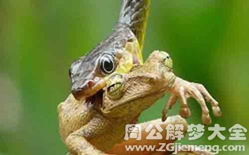 梦见蛇吃青蛙.jpg
