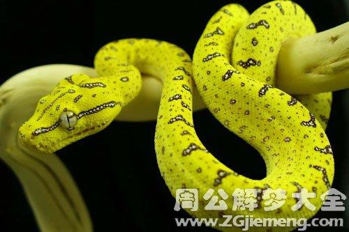 孕妇梦见蟒蛇