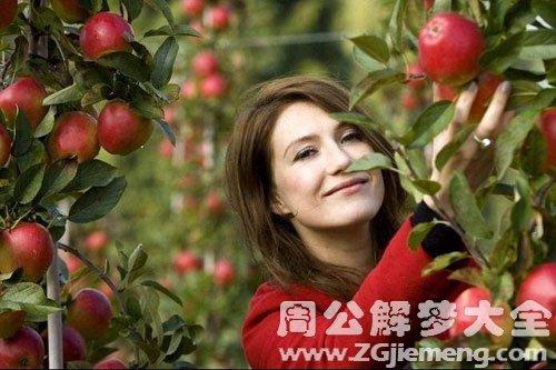 梦见摘苹果