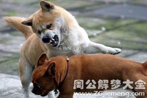 梦见狗打架