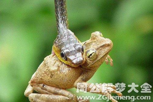 梦见蛇吃青蛙