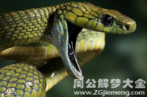 孕妇梦见蛇
