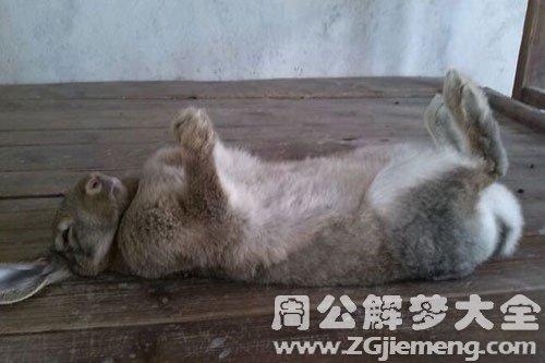梦见兔子死了