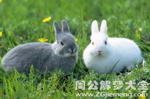 梦见兔子被捕获
