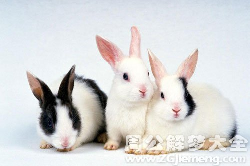 孕妇梦见兔子