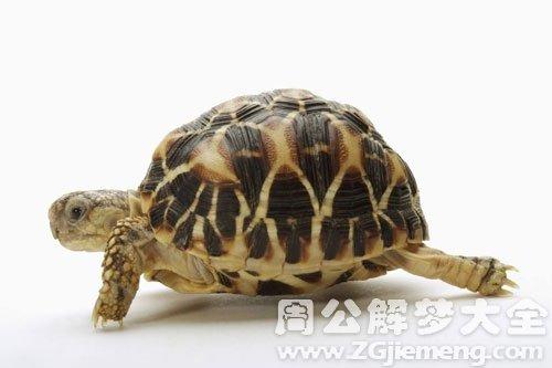 孕妇梦见乌龟