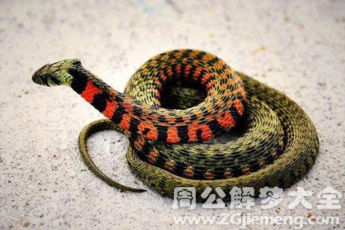 梦见蛇在床下
