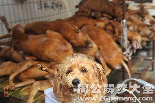 梦见卖狗肉