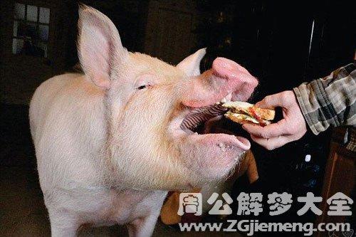 梦见大肥猪
