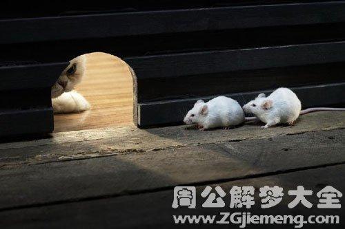 梦见小老鼠