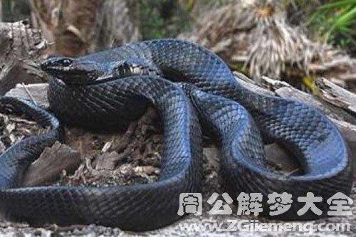 做梦梦到白色的蛇_梦见黑蛇是什么意思_梦到黑蛇好不好_大鱼解梦网