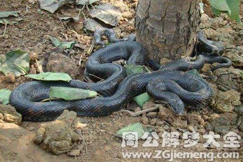 孕妇梦见黑蛇