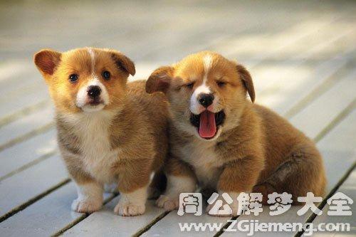 孕妇梦见狗-小狗