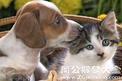 女人梦见猫和狗
