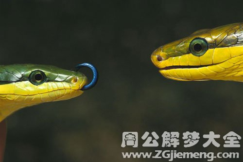 梦见小蛇变大蛇